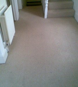 Heavily Soiled Carpet After cleaning